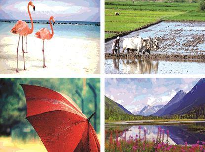P1305 Birds & Farming  Posters